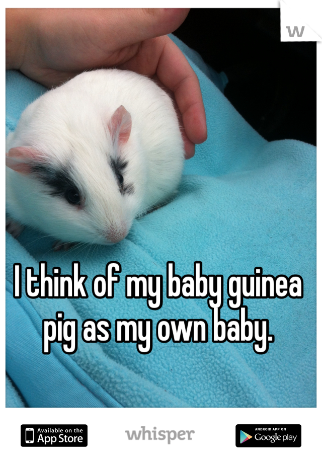 I think of my baby guinea pig as my own baby.