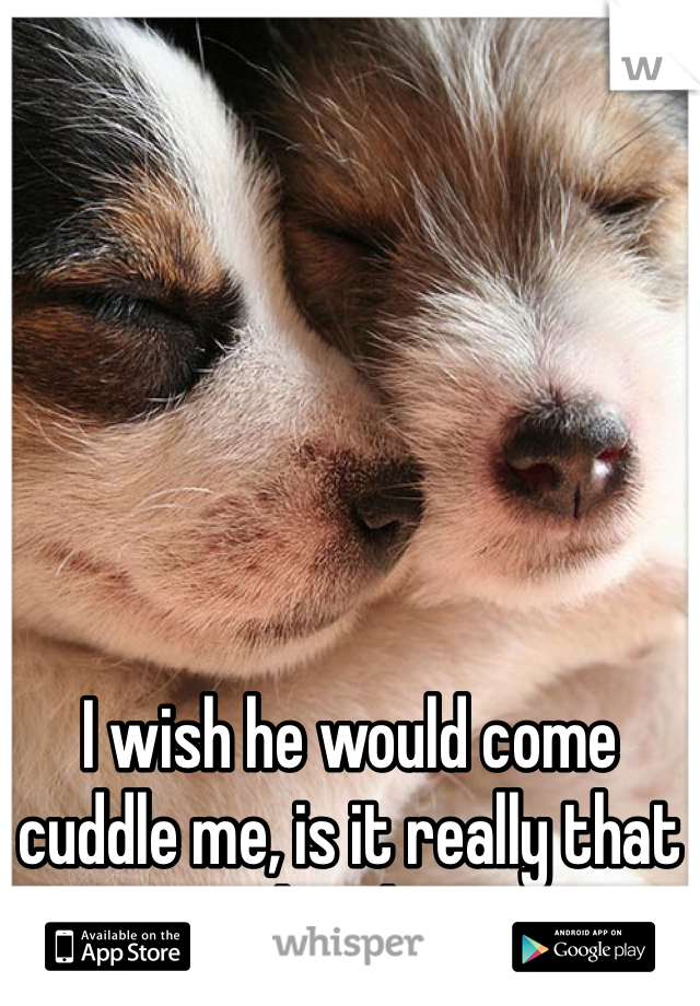 I wish he would come cuddle me, is it really that hard?