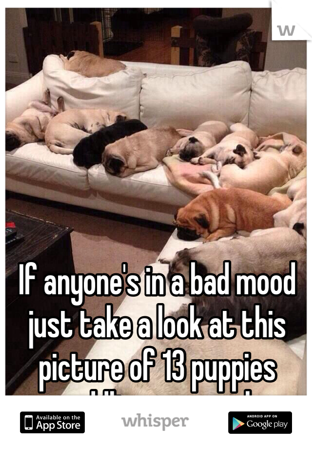 If anyone's in a bad mood just take a look at this picture of 13 puppies cuddlin on a couch