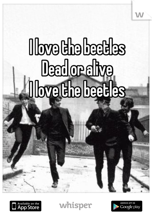 I love the beetles  Dead or alive I love the beetles