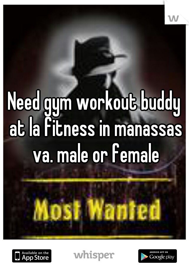 Need gym workout buddy at la fitness in manassas va. male or female
