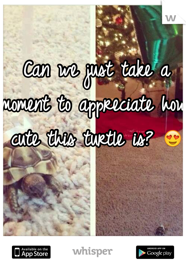 Can we just take a moment to appreciate how cute this turtle is? 😍