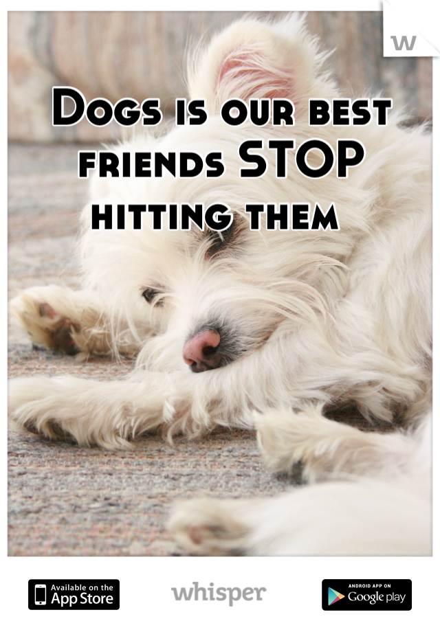 Dogs is our best friends STOP hitting them
