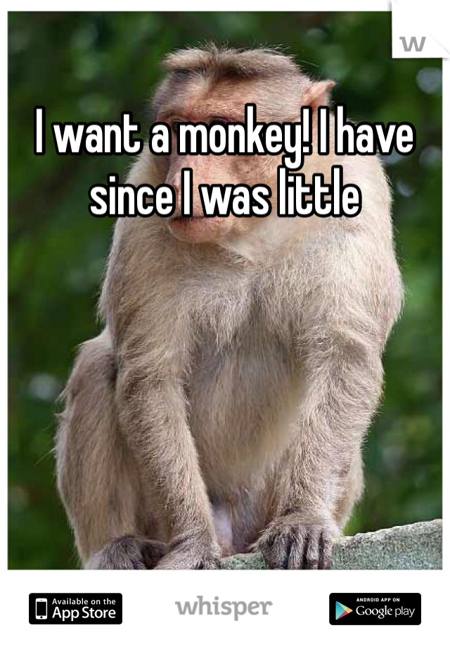 I want a monkey! I have since I was little