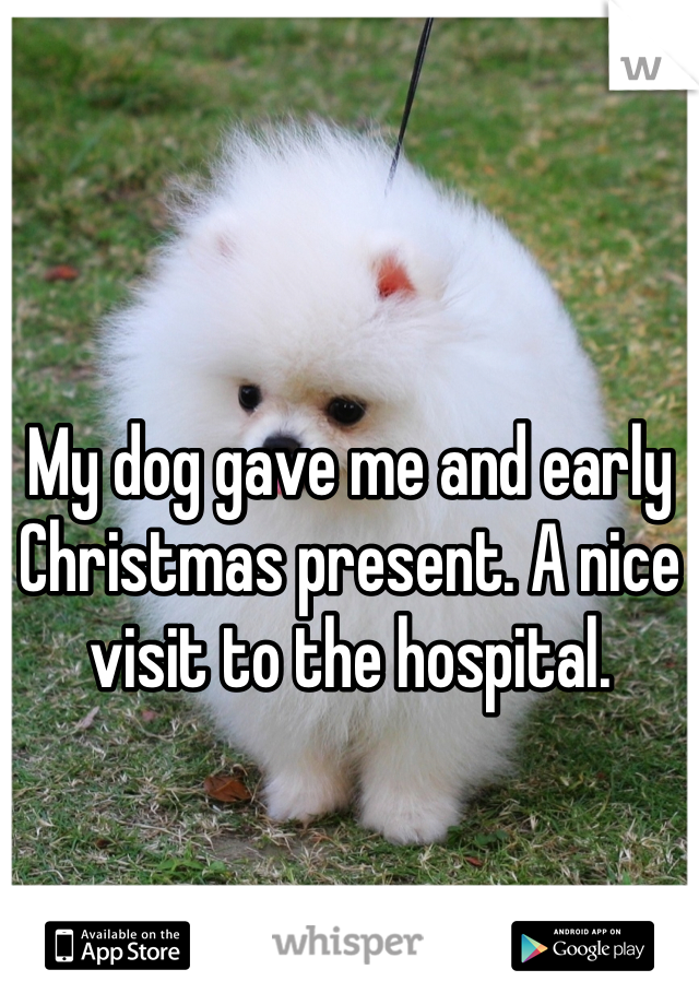My dog gave me and early Christmas present. A nice visit to the hospital.