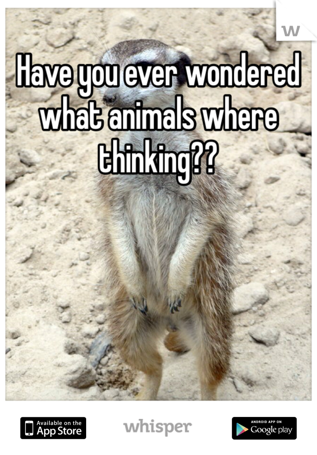 Have you ever wondered what animals where thinking??