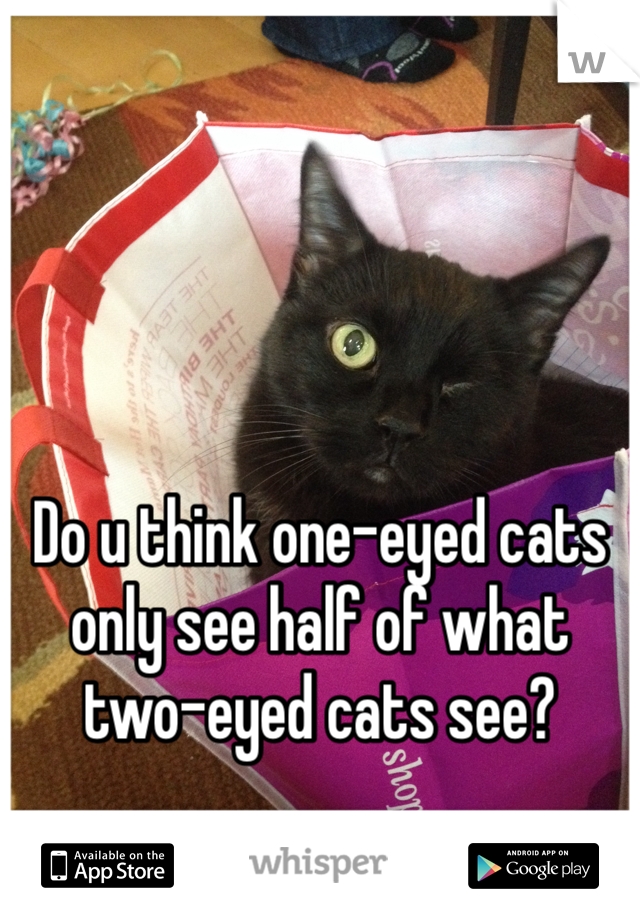 Do u think one-eyed cats only see half of what two-eyed cats see?