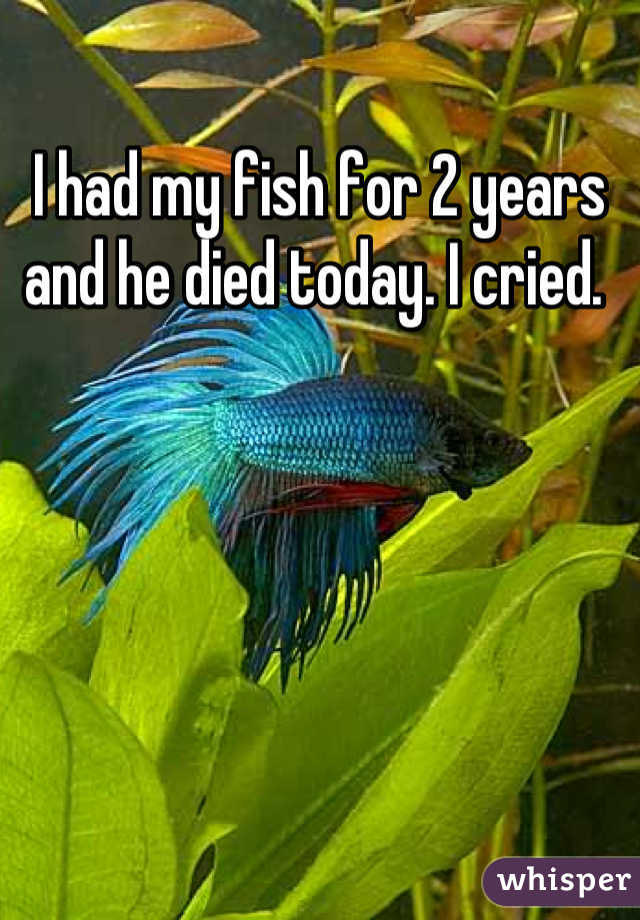I had my fish for 2 years and he died today. I cried.