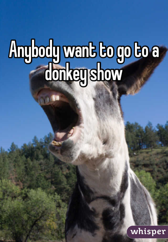 Anybody want to go to a donkey show