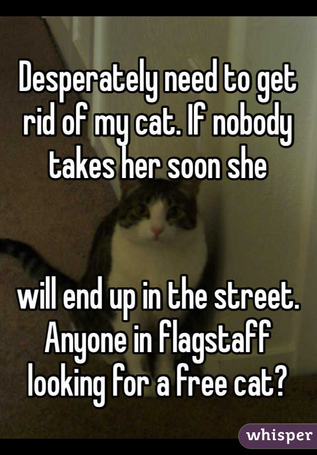 Desperately need to get rid of my cat. If nobody takes her soon she    will end up in the street. Anyone in flagstaff looking for a free cat?