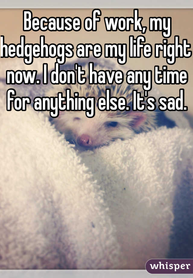 Because of work, my hedgehogs are my life right now. I don't have any time for anything else. It's sad.