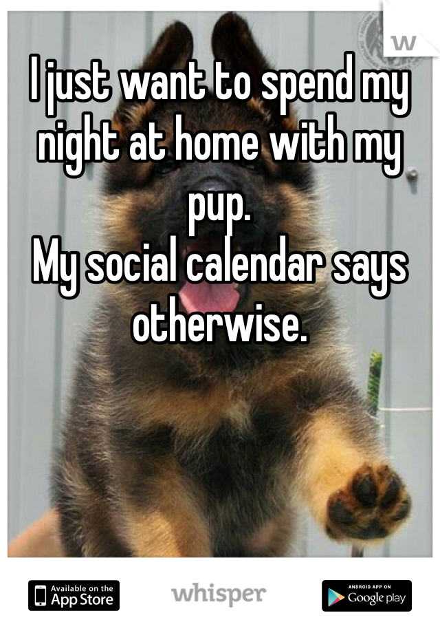 I just want to spend my night at home with my pup.  My social calendar says otherwise.