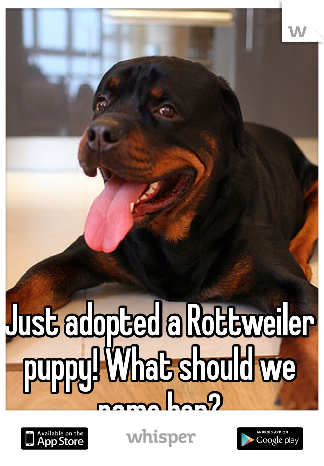 Just adopted a Rottweiler puppy! What should we name her?