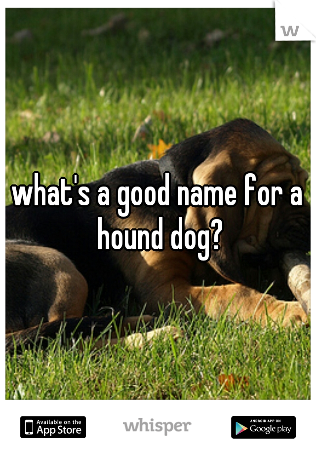 what's a good name for a hound dog?