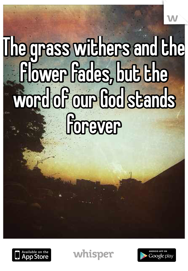 The grass withers and the flower fades, but the word of our God stands forever