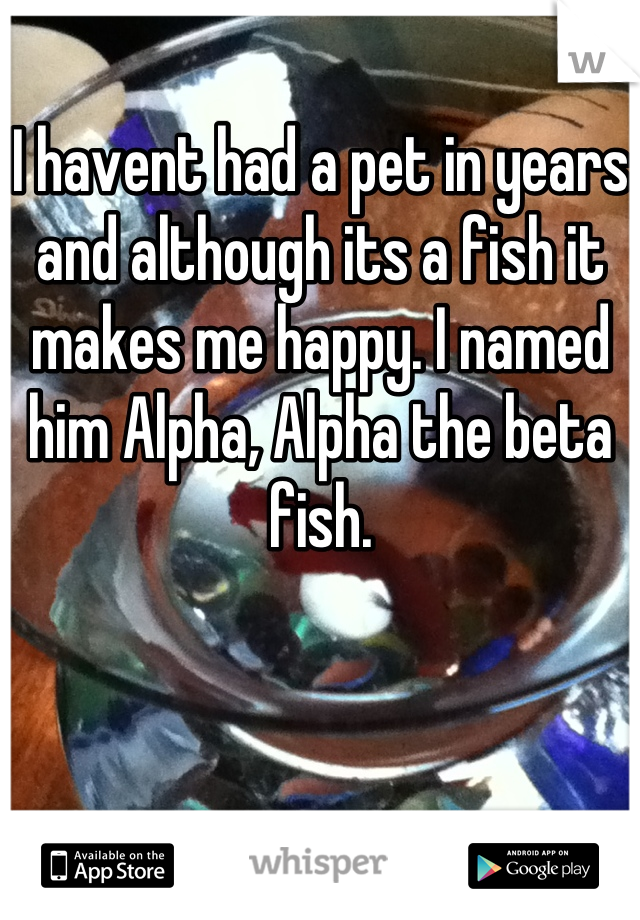 I havent had a pet in years and although its a fish it makes me happy. I named him Alpha, Alpha the beta fish.