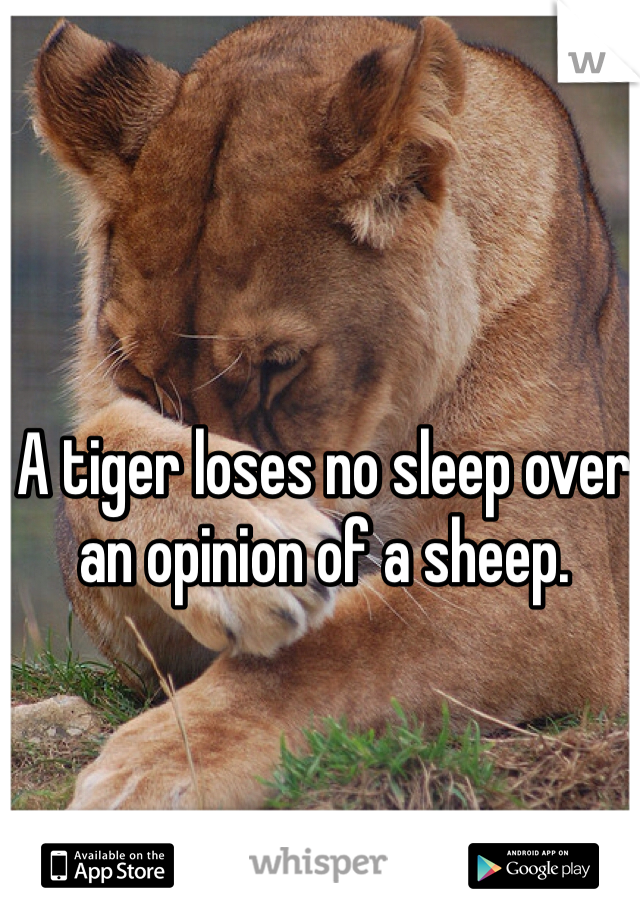 A tiger loses no sleep over an opinion of a sheep.