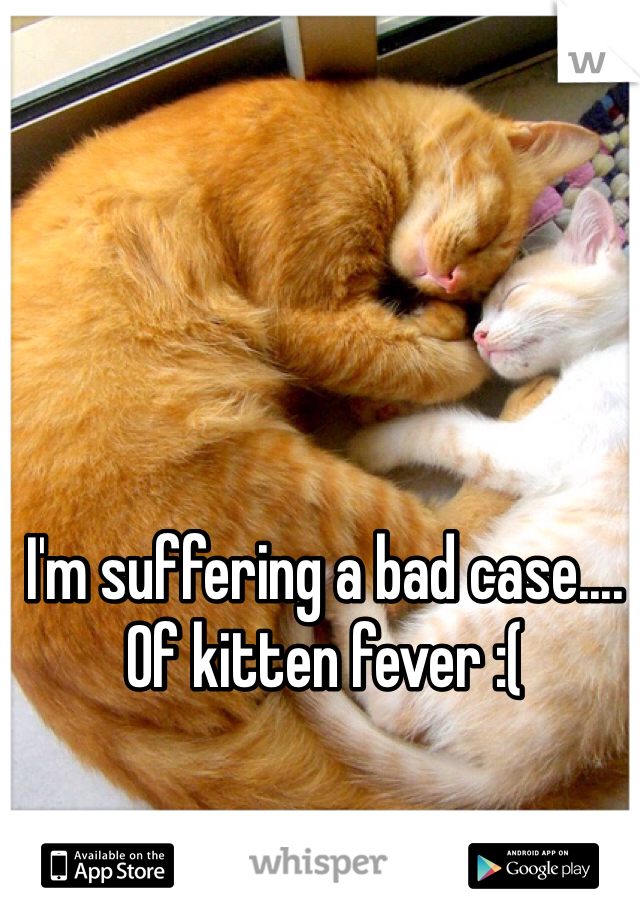 I'm suffering a bad case.... Of kitten fever :(