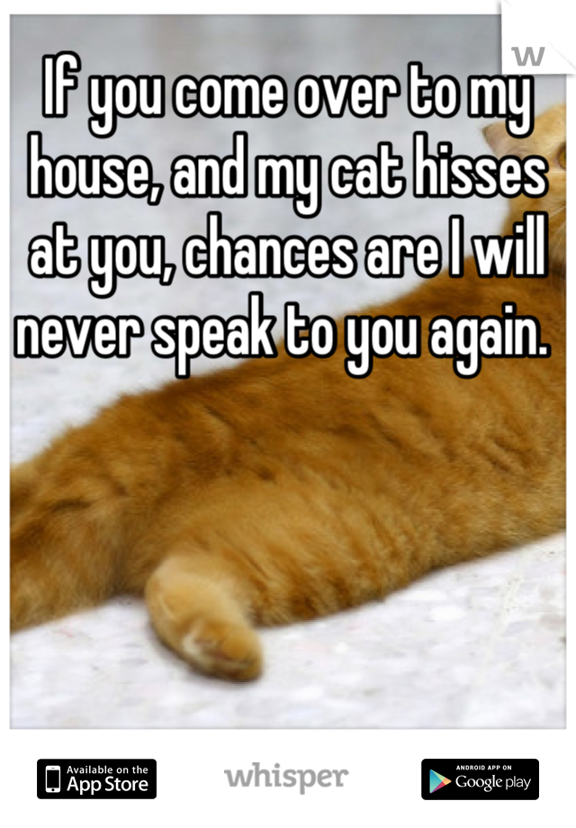 If you come over to my house, and my cat hisses at you, chances are I will never speak to you again.