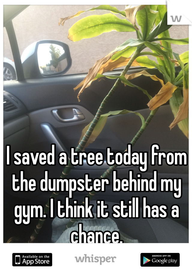 I saved a tree today from the dumpster behind my gym. I think it still has a chance.