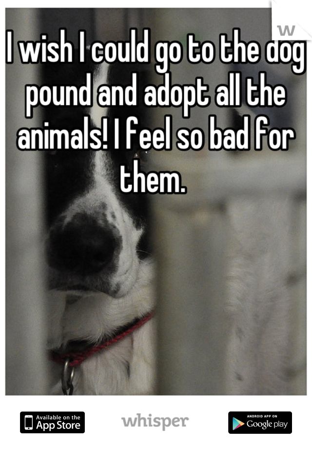 I wish I could go to the dog pound and adopt all the animals! I feel so bad for them.
