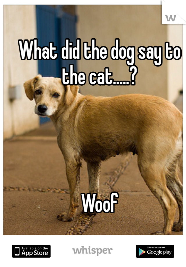 What did the dog say to the cat.....?      Woof