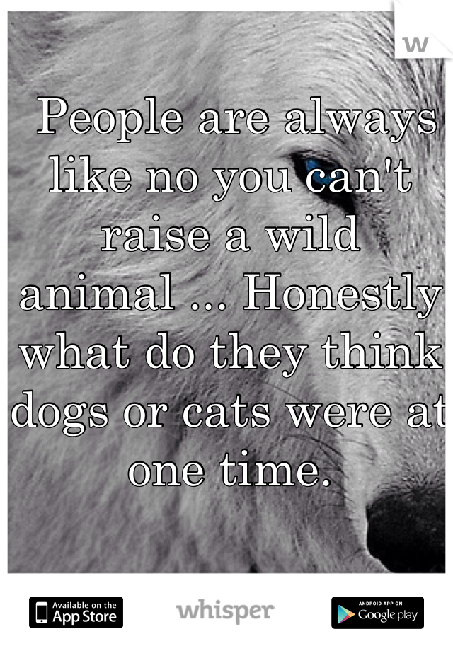 People are always like no you can't raise a wild animal ... Honestly what do they think dogs or cats were at one time.