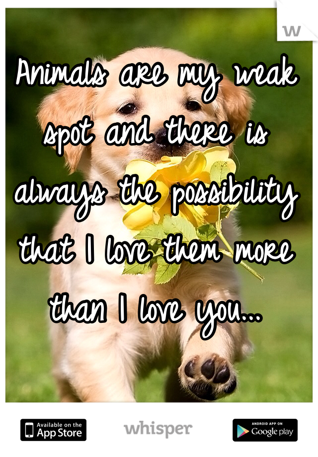 Animals are my weak spot and there is always the possibility that I love them more than I love you...