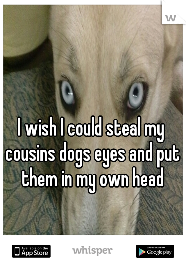 I wish I could steal my cousins dogs eyes and put them in my own head