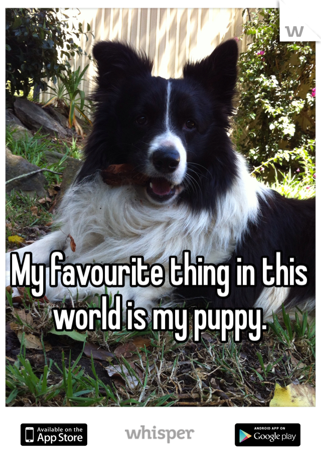 My favourite thing in this world is my puppy.
