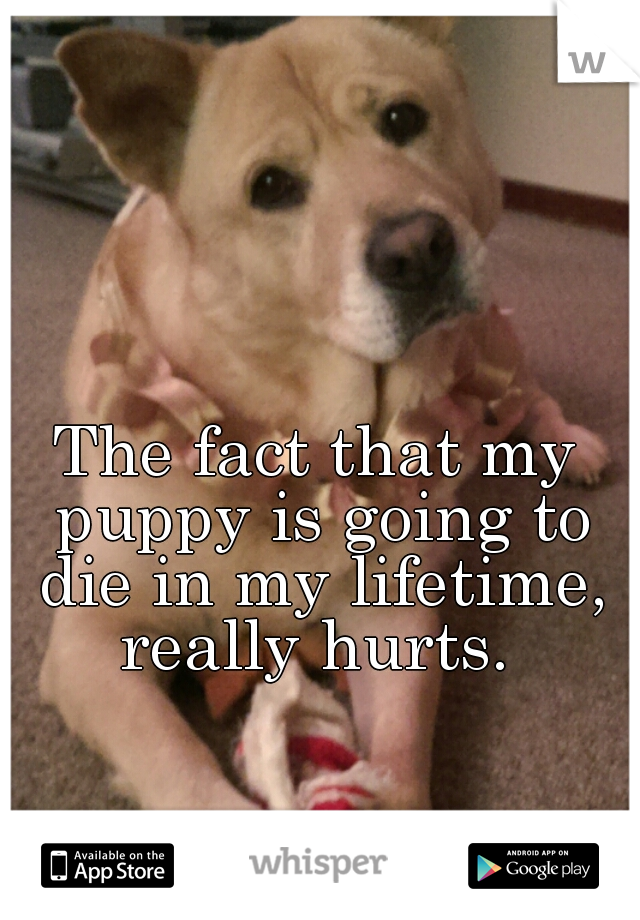 The fact that my puppy is going to die in my lifetime, really hurts.