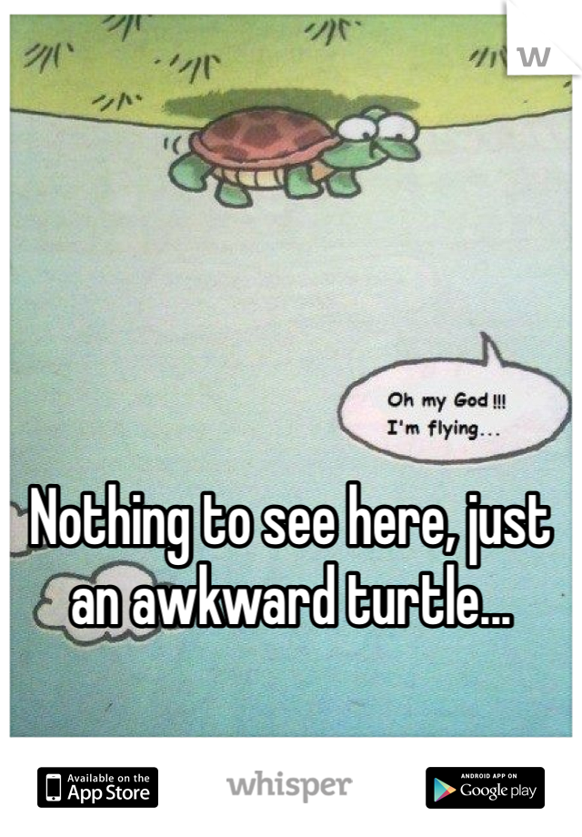 Nothing to see here, just an awkward turtle...
