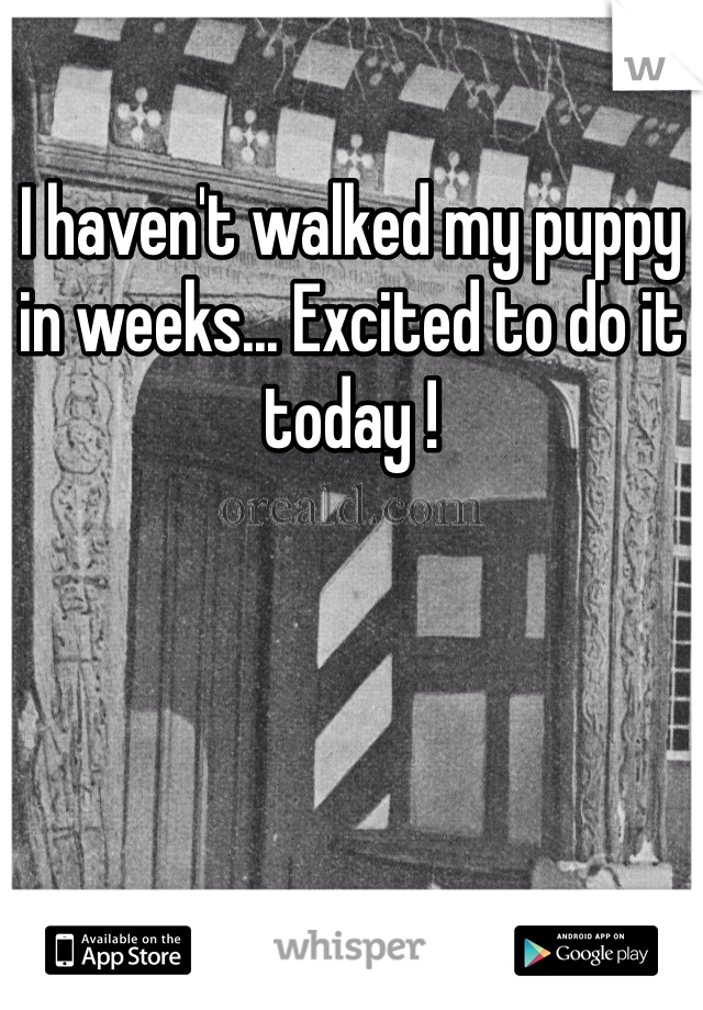 I haven't walked my puppy in weeks... Excited to do it today !