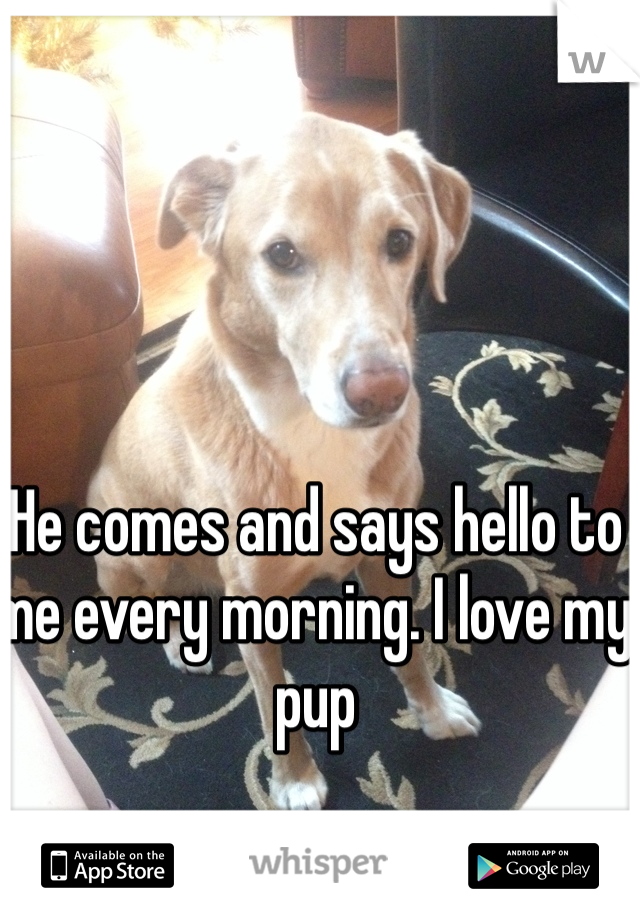 He comes and says hello to me every morning. I love my pup