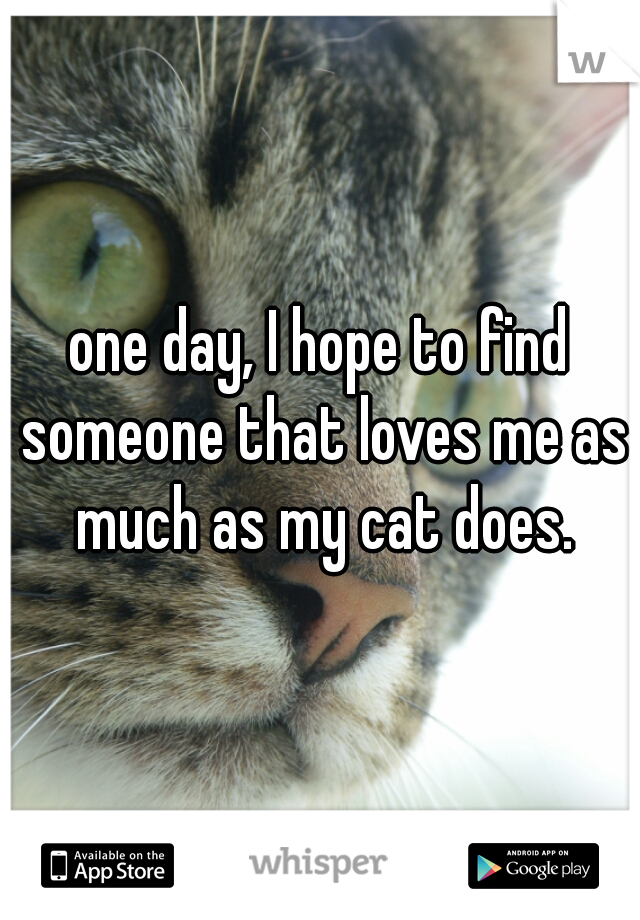 one day, I hope to find someone that loves me as much as my cat does.