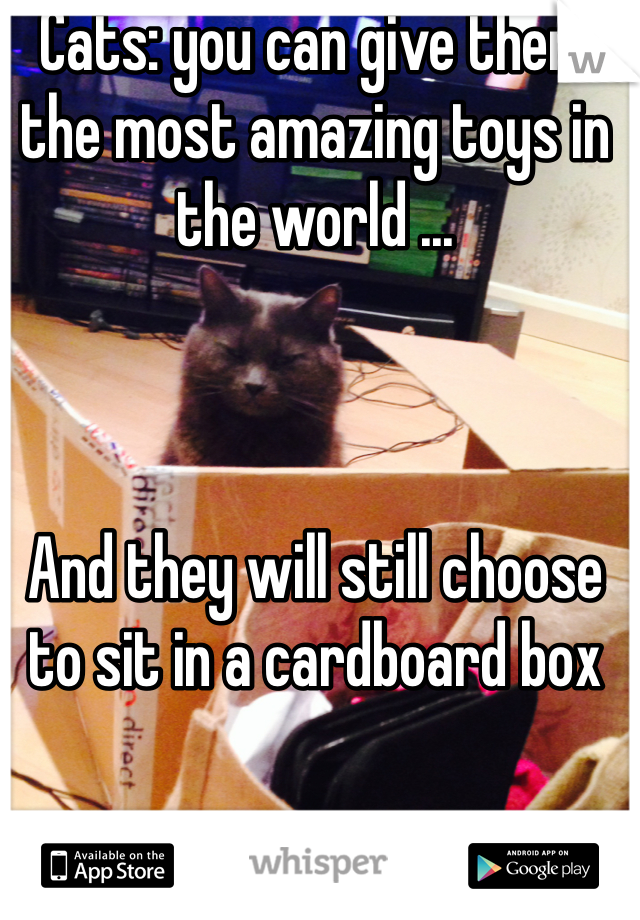 Cats: you can give them the most amazing toys in the world ...    And they will still choose to sit in a cardboard box