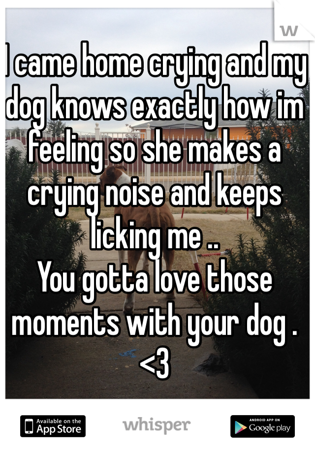 I came home crying and my dog knows exactly how im feeling so she makes a crying noise and keeps licking me .. You gotta love those moments with your dog . <3