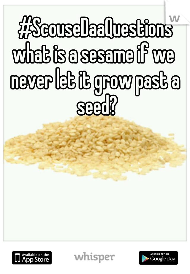 #ScouseDaaQuestions what is a sesame if we  never let it grow past a seed?
