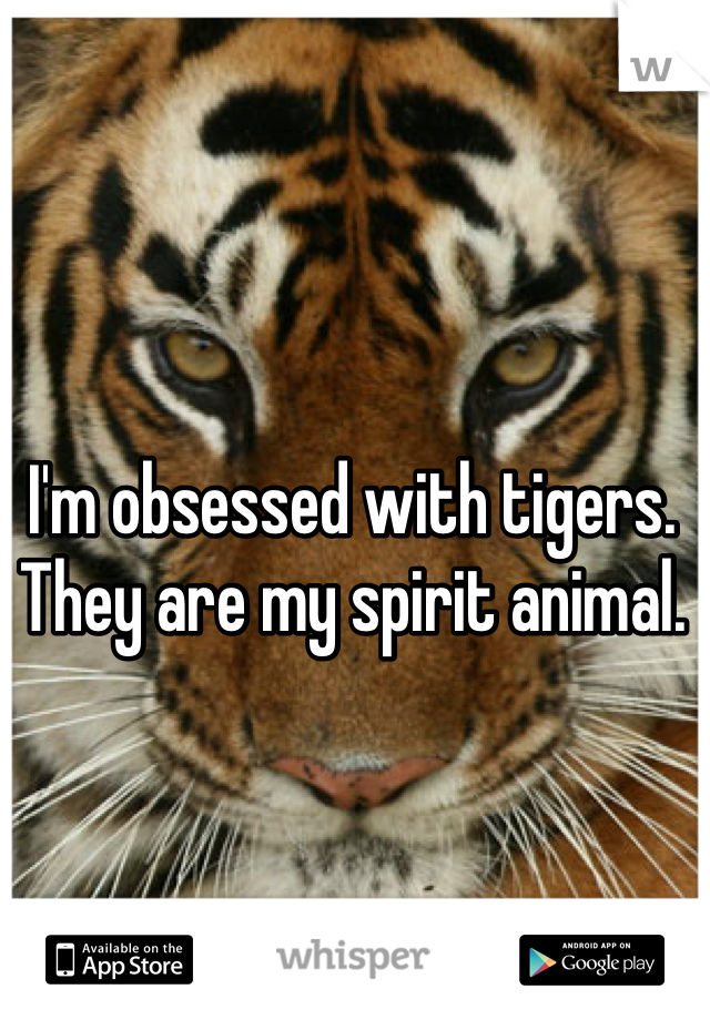 I'm obsessed with tigers. They are my spirit animal.