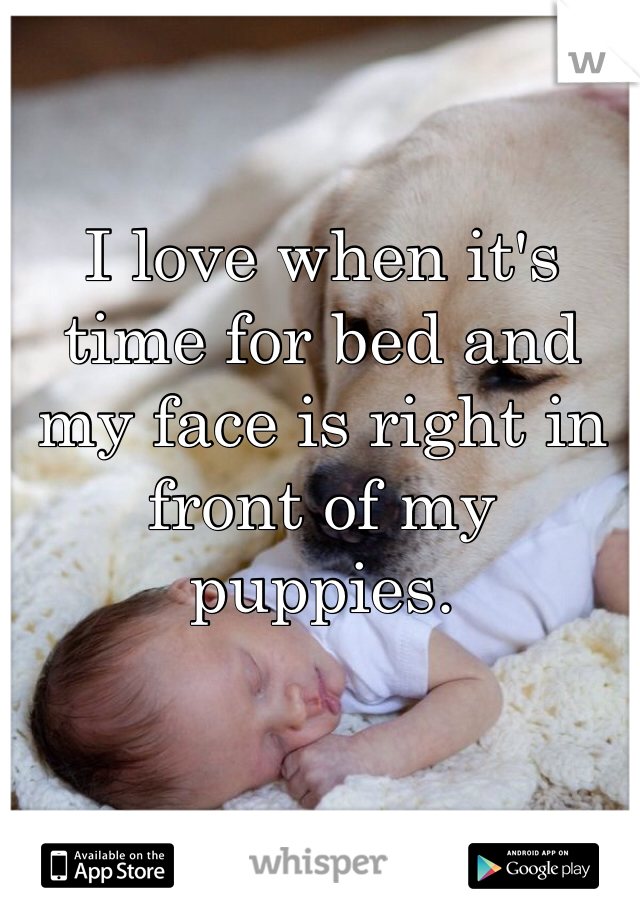 I love when it's time for bed and my face is right in front of my puppies.