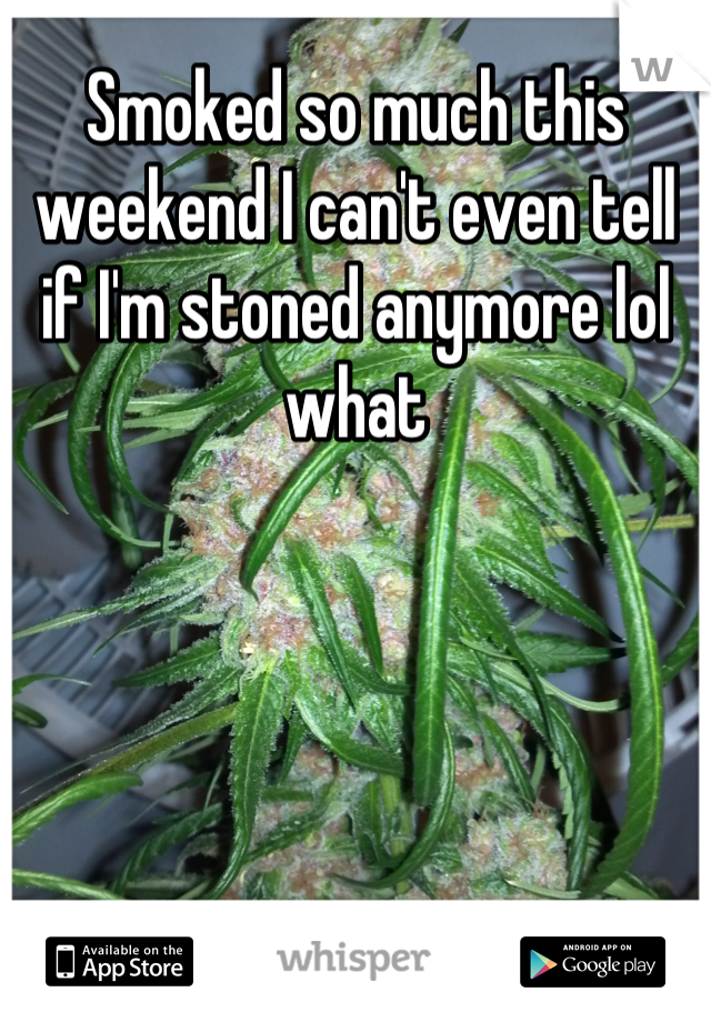 Smoked so much this weekend I can't even tell if I'm stoned anymore lol what