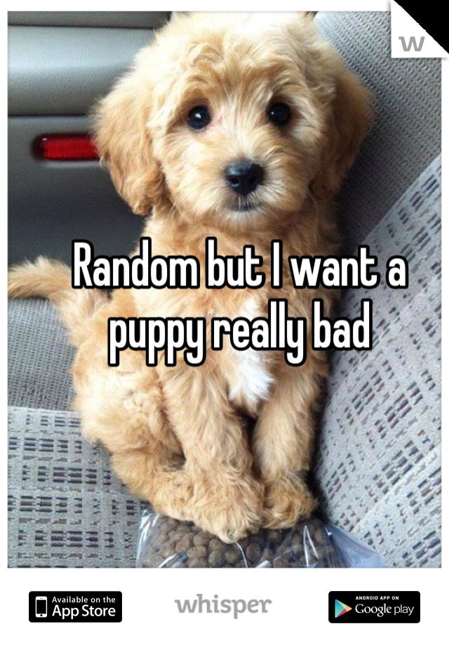 Random but I want a puppy really bad