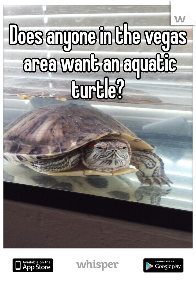 Does anyone in the vegas area want an aquatic turtle?