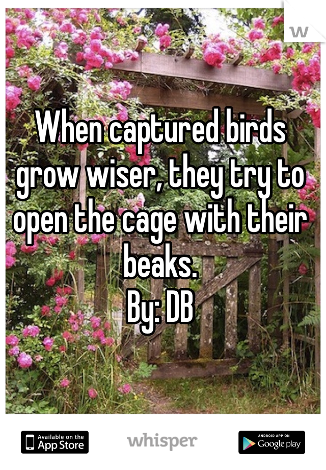 When captured birds grow wiser, they try to open the cage with their beaks. By: DB