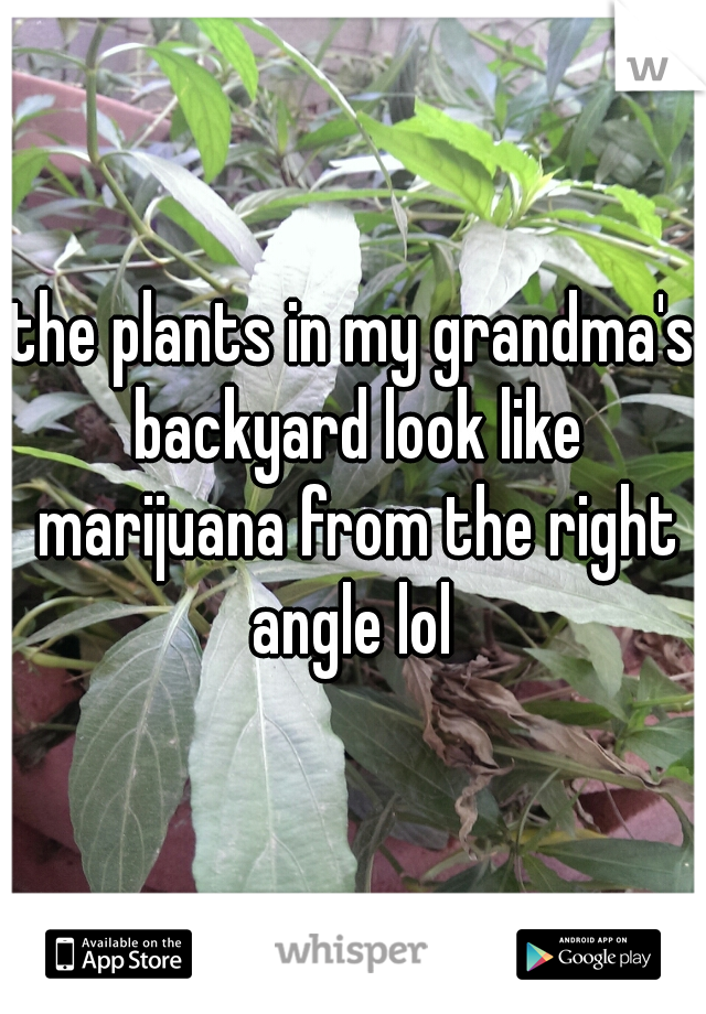 the plants in my grandma's backyard look like marijuana from the right angle lol