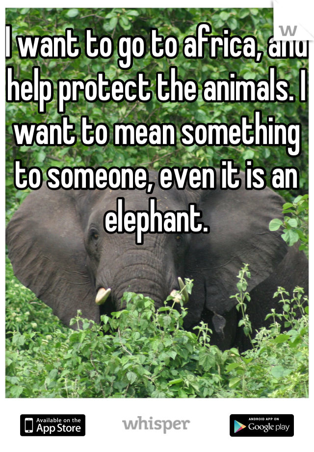 I want to go to africa, and help protect the animals. I want to mean something to someone, even it is an elephant.