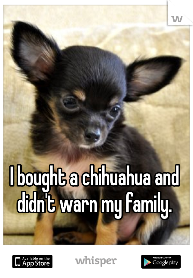 I bought a chihuahua and didn't warn my family.