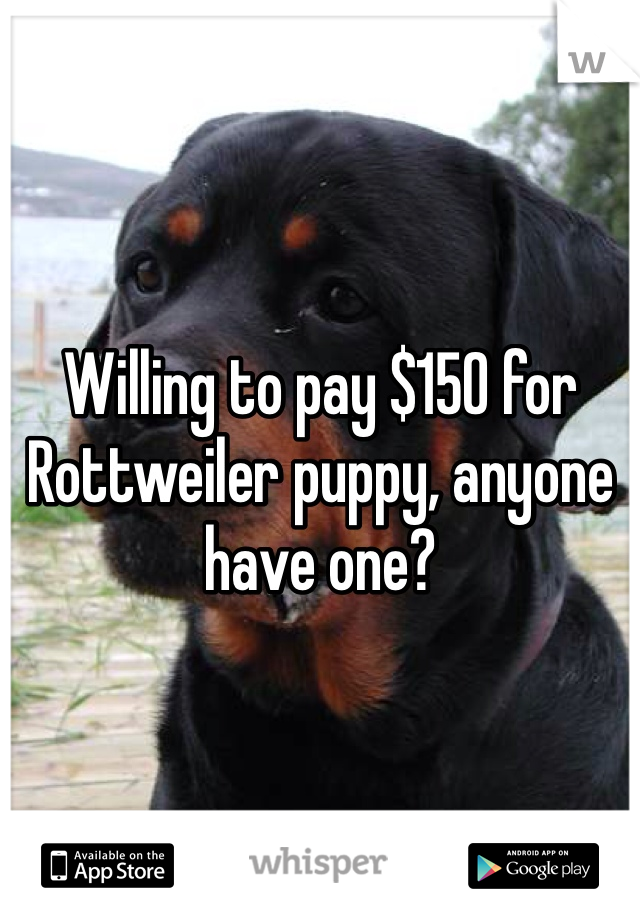 Willing to pay $150 for Rottweiler puppy, anyone have one?