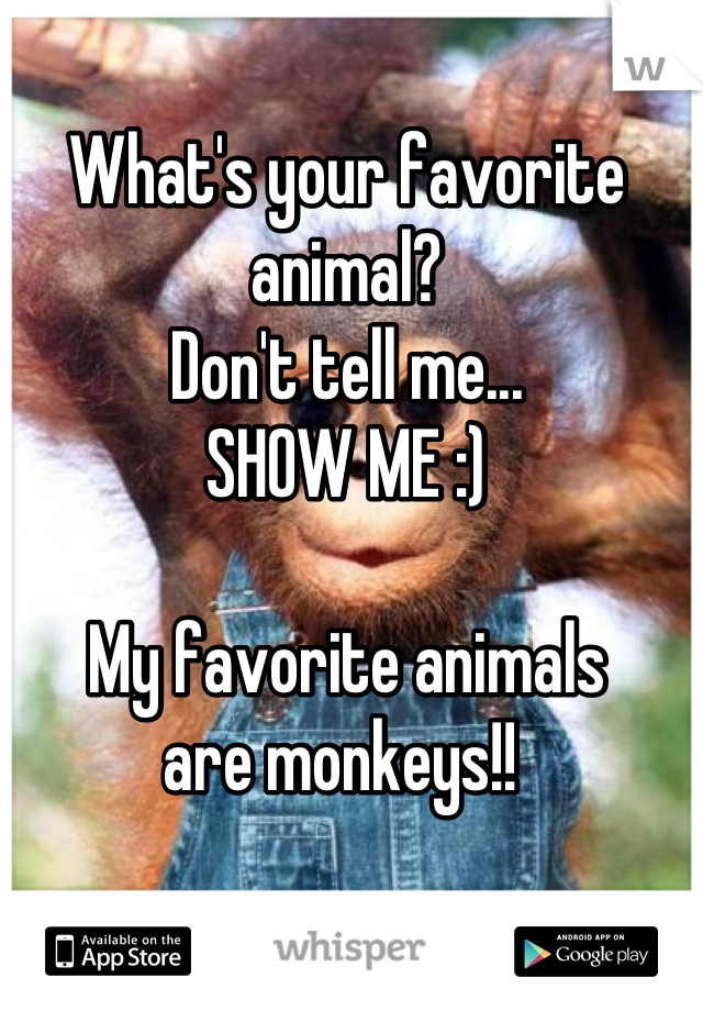 What's your favorite animal? Don't tell me... SHOW ME :)  My favorite animals  are monkeys!!