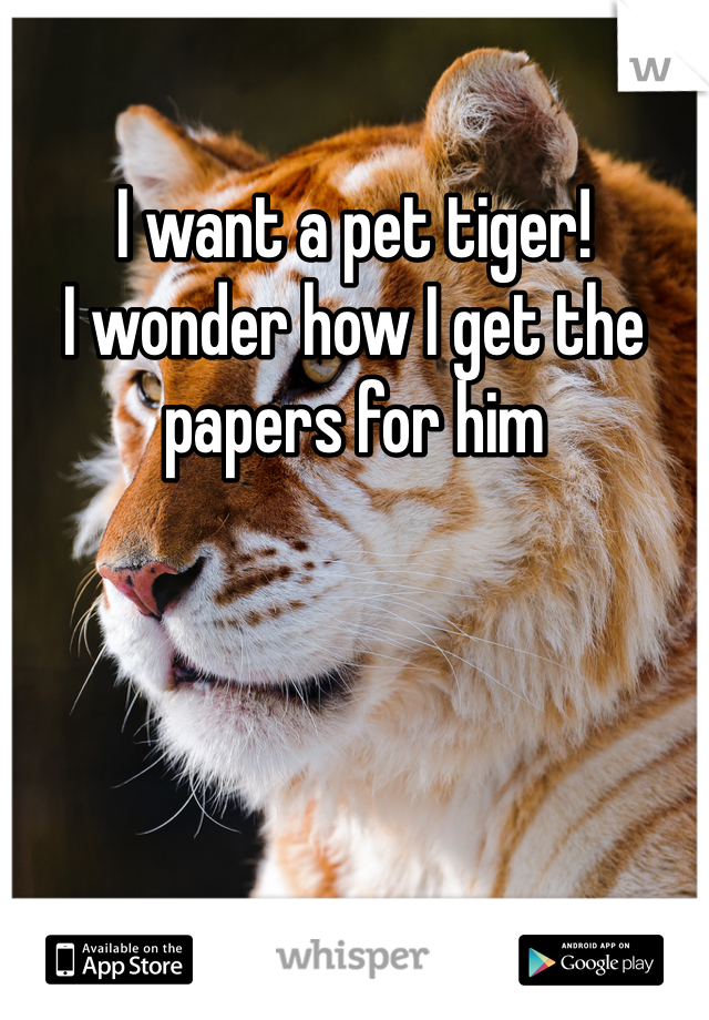 I want a pet tiger!  I wonder how I get the papers for him